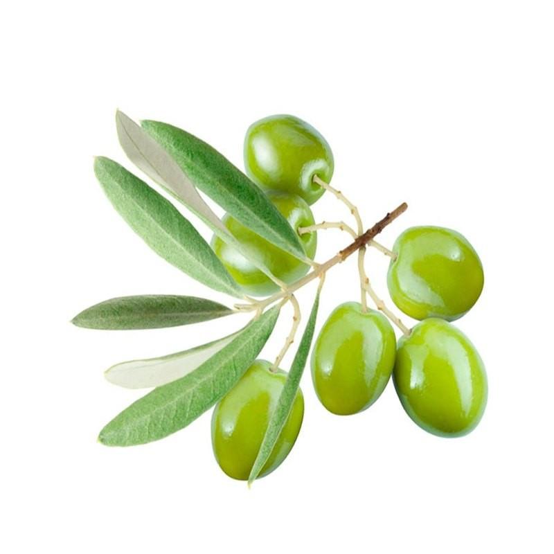 Сквален оливковий