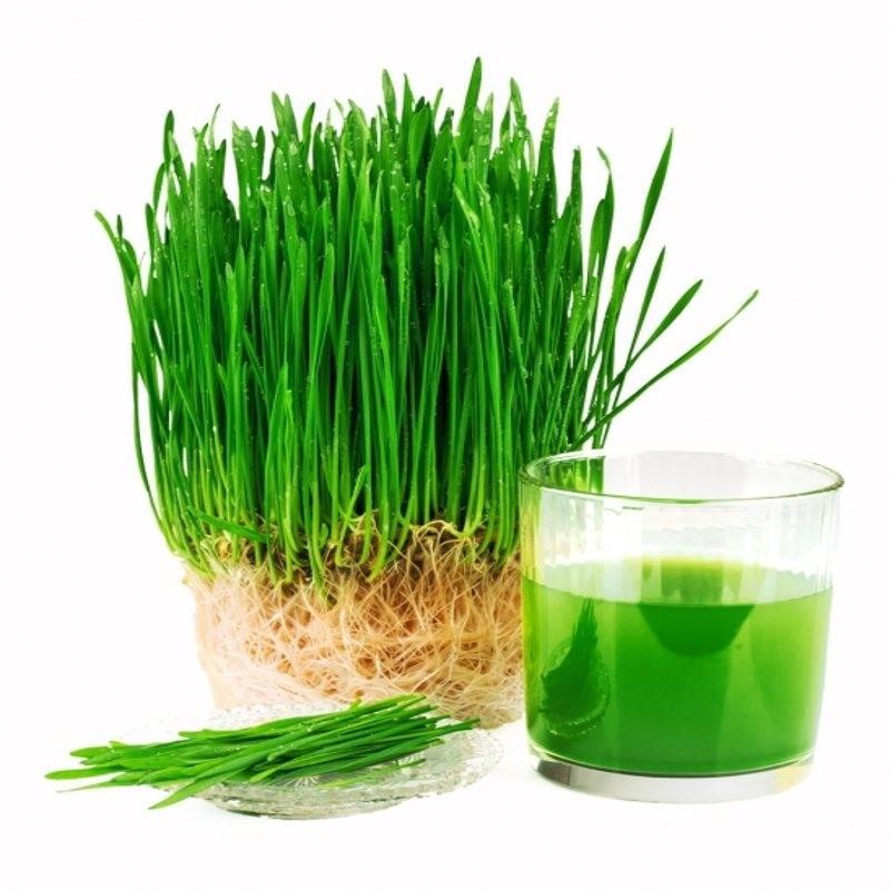 Гідролізат протеїнів пророслої пшениці