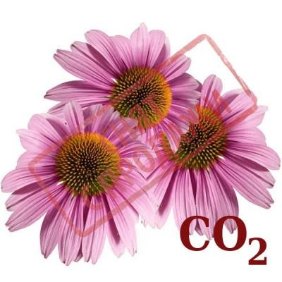 СНЯТ С ПРОДАЖИ СО2-экстракт эхинацеи