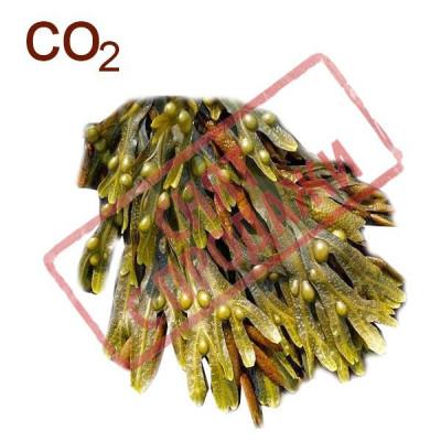 СНЯТ С ПРОДАЖИ СО2-экстракт фукуса