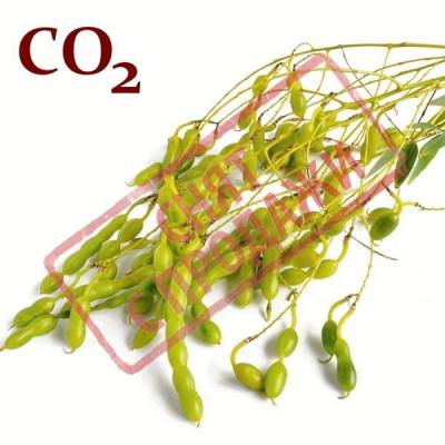 ЗНЯТО З ПРОДАЖУ СО2-екстракт софори