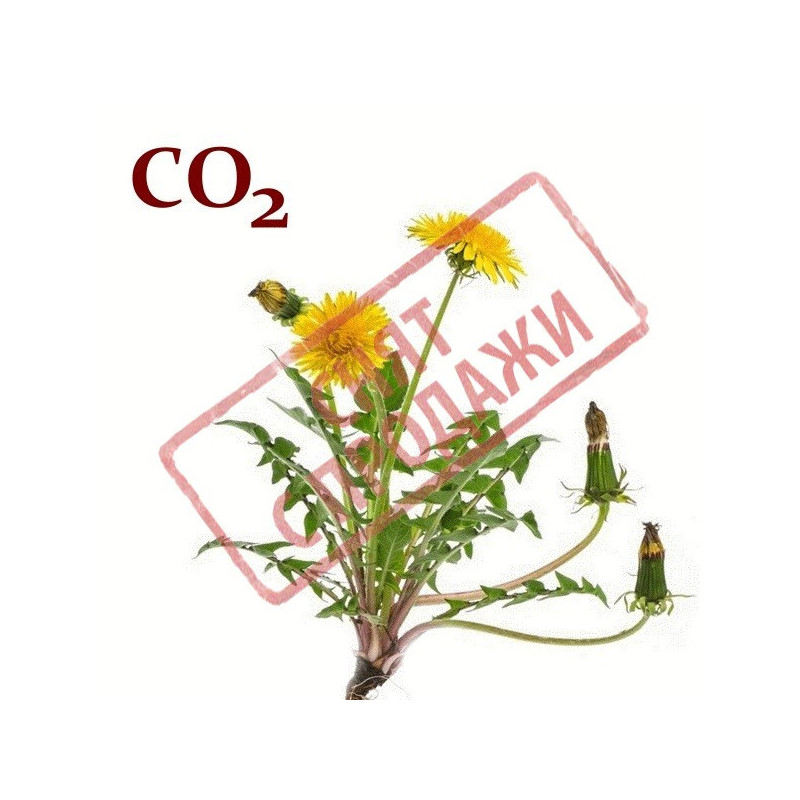 СО2-екстракт кореня кульбаби