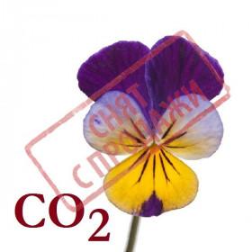 СНЯТ С ПРОДАЖИ СО2-экстракт фиалки