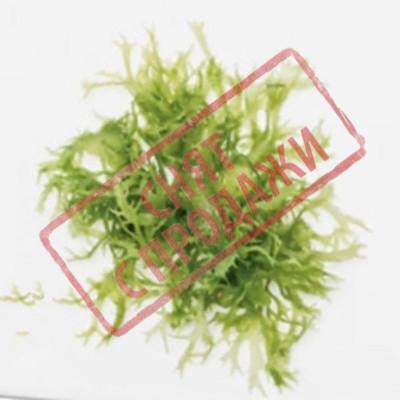 ЗНЯТО З ПРОДАЖУ Гідролізат полісахаридів ісландського моху