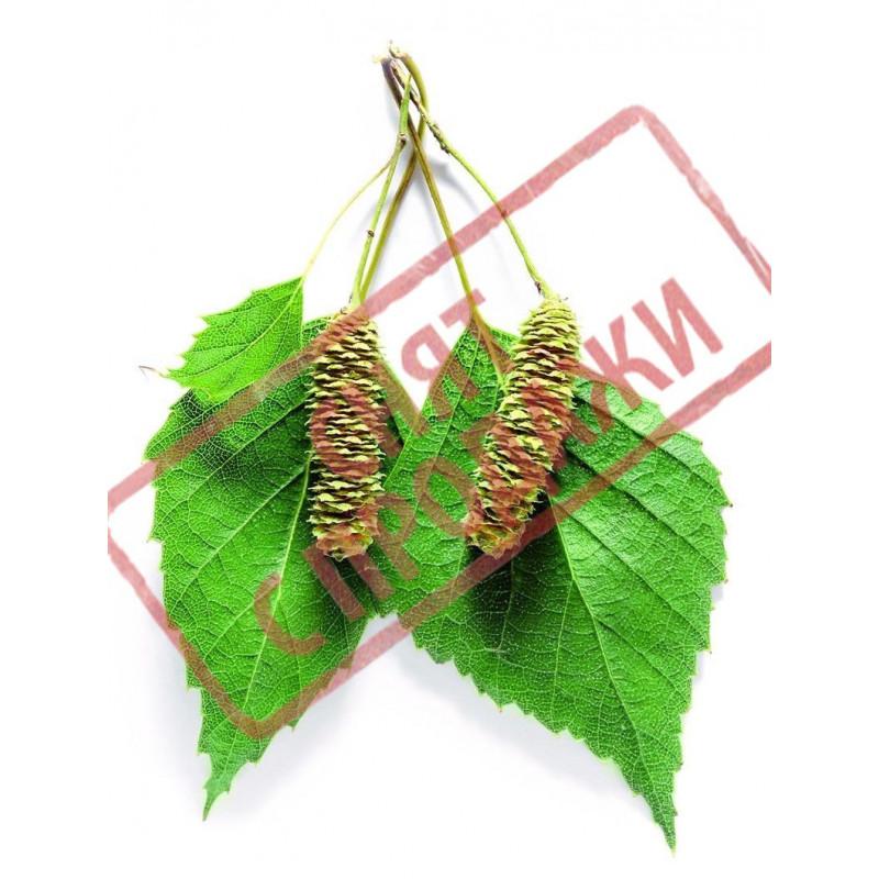 Гідролат березового листя