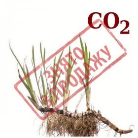 ЗНЯТО З ПРОДАЖУ СО2-екстракт аїру