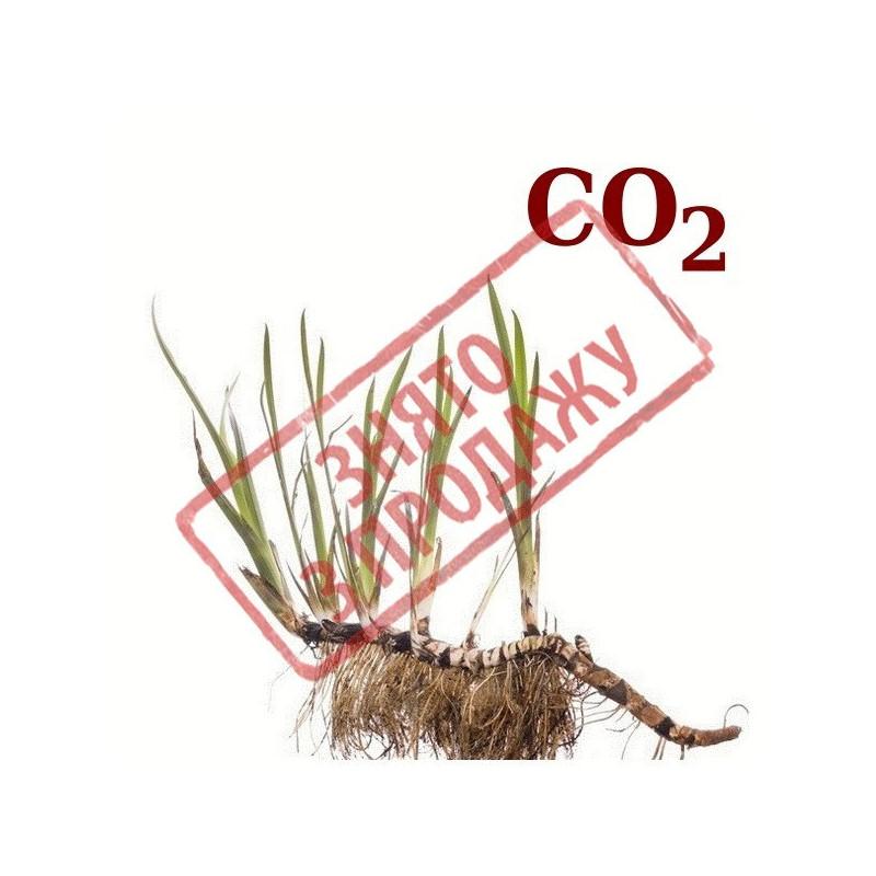 СО2-екстракт аїру