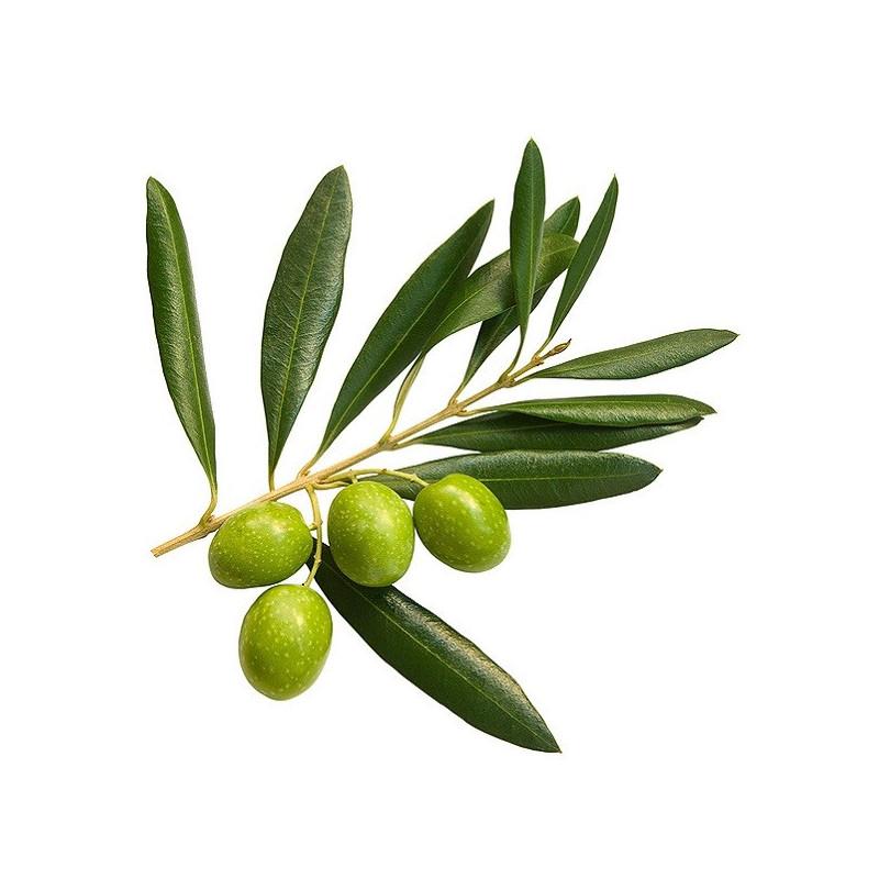 Аюрведична пудра листа оливи