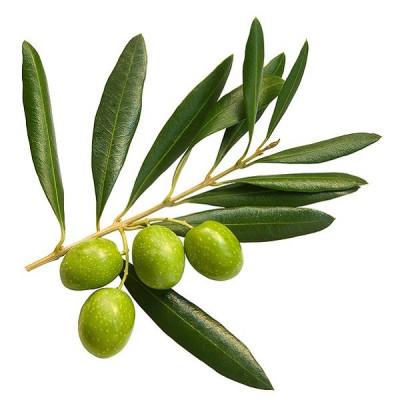 Аюрведическая пудра листа оливы